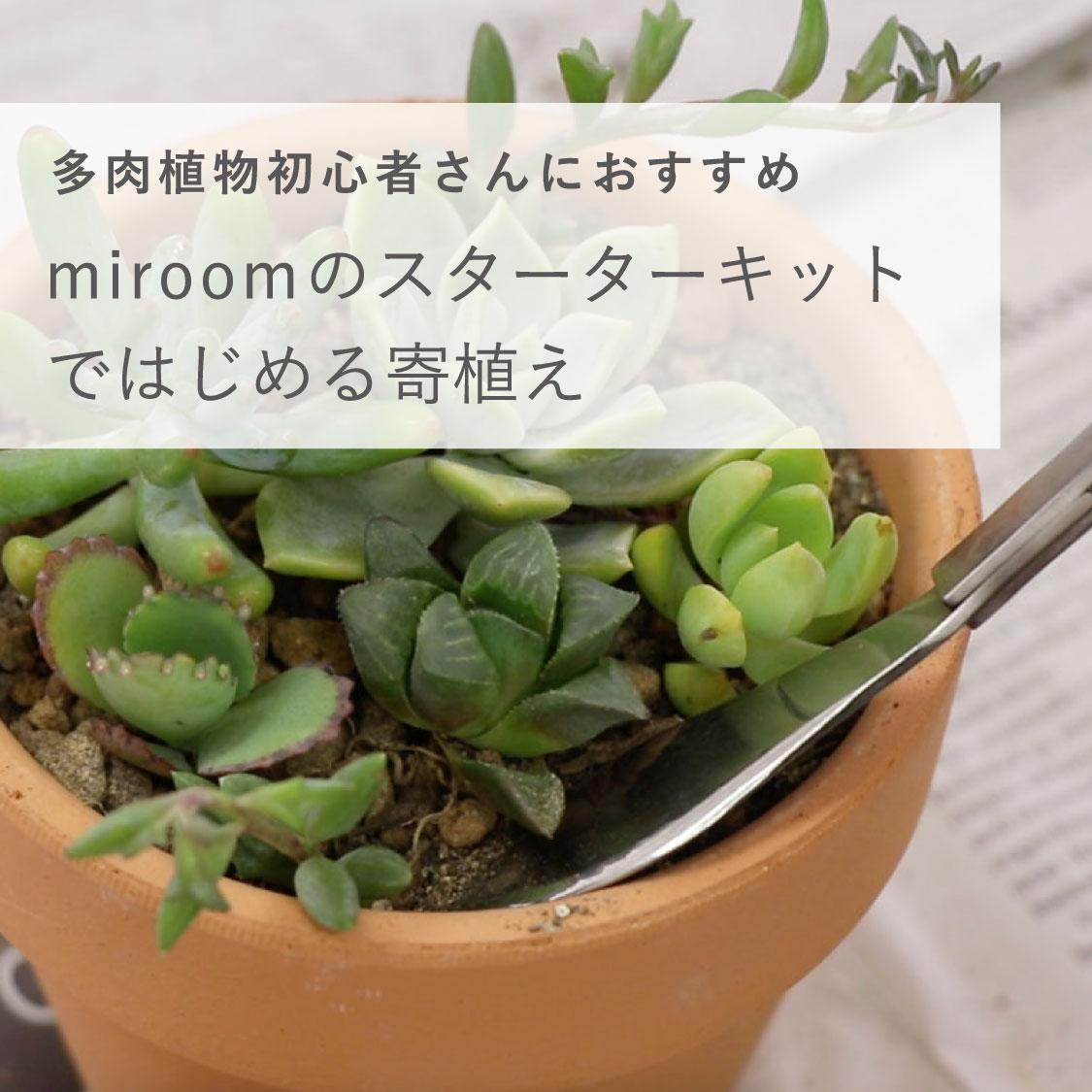 Plant top sp